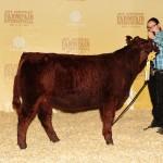 Alegria - Reserve Heifer Calf - Farmfair